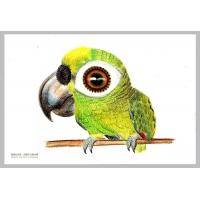 大头鸟设计案例,插画鸟卡通设计案例